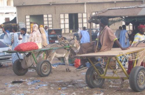 Article : Les charrettes de  Nouakchott : Un spectacle archaïque, une utilité certaine