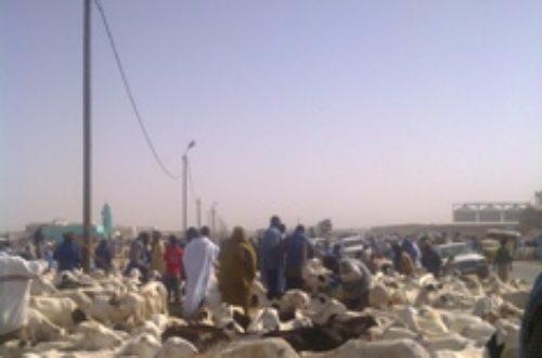 Article : Tabaski : Le sacrifice du mouton…et des pères de familles