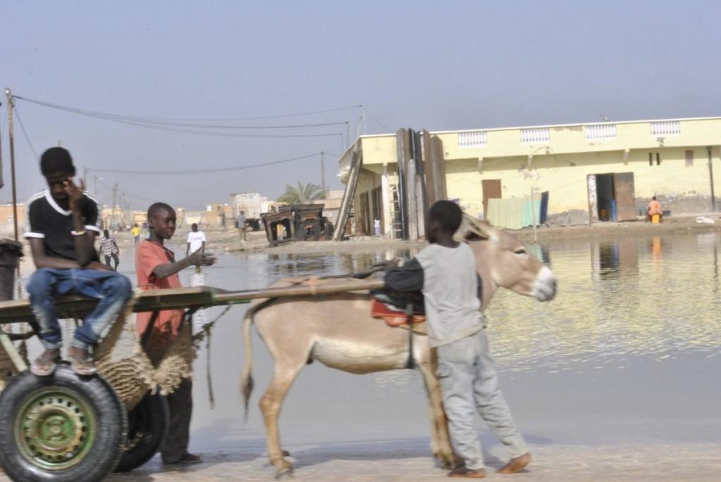 En période de pluies à Nouakchott, la charrette remplace la voiture (photo : facebook)
